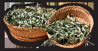 Olive Basket